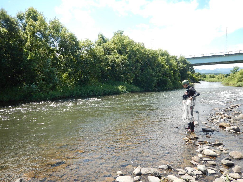岩木川取水堰魚類調査の模様